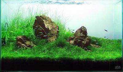 grass_design_r
